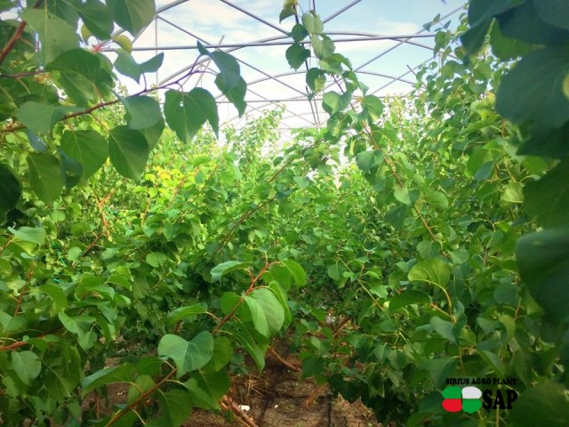 Azienda Agricola GEVA dei fratelli Vitа