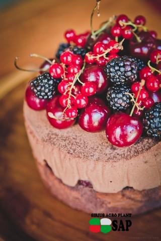 Джерело статті: sweetgastronomy.com