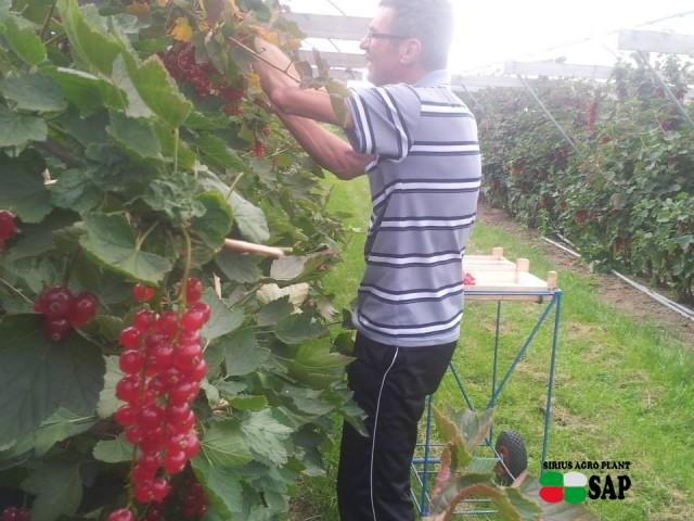 De Sikkert Zachtfruit