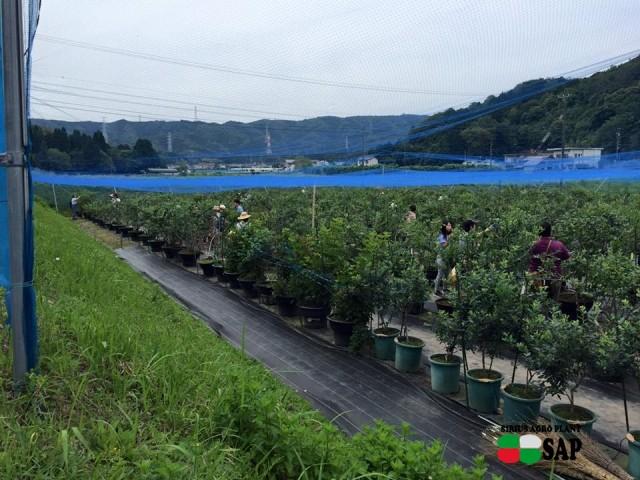 ブルーベリーファームおかざき(愛知県の夏の味覚狩り観光スポット)