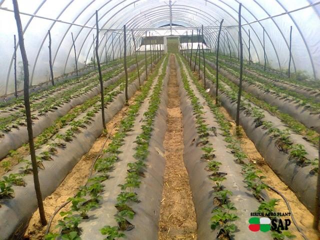 Растения высажены в 1 августа 2015